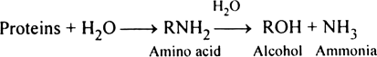 Comment upon ammonification.