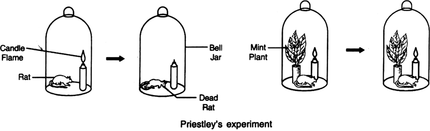 Describe Priestley's experiment.