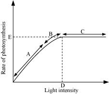 Figure 13.10 shows the effect of light on the rate of photosynthesis. Based on the graph, answer the following questions: (a) At which point/s (A, B or C) in the curve is light a limiting factor? (b) What could be the limiting factor/s in region A? (c) What do C and D represent on the curve?