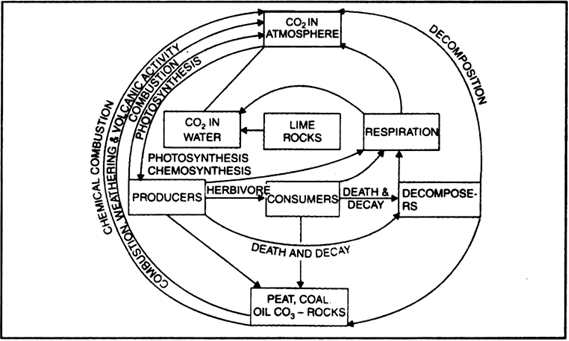 give a graphic representation of carbon cycle in nature from Phosphorus in Toothpaste give a graphic representation of carbon cycle in nature