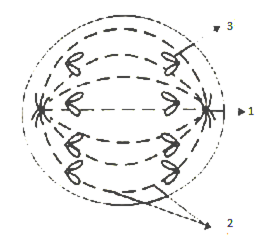 I draw a neat and well labelled diagram of the chloroplast ii the diagram given below represents a stage during mitotic cell division in an animal cell ccuart Gallery