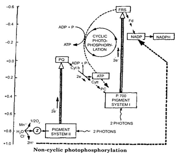 A  Describe Lederberg U2019s Replica Plating Experiment To