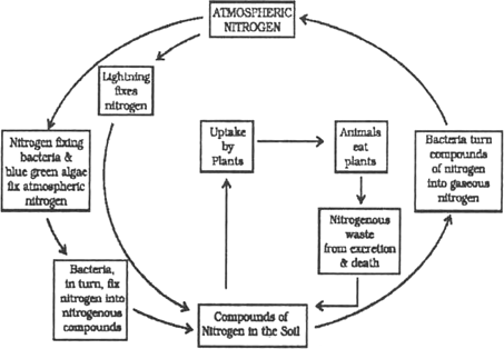 Explain the nitrogen cycle from science micro organisms friends they convert the compounds of nitrogen back into nitrates and nitrites these are further converted into nitrogen gas and released in atmosphere by certain ccuart Image collections