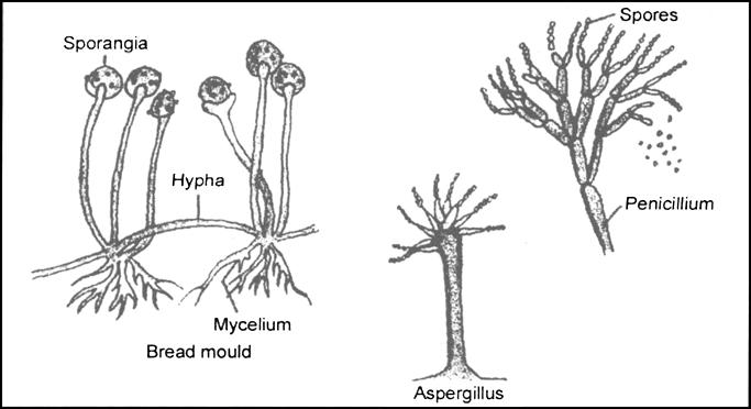 diagram of a mould