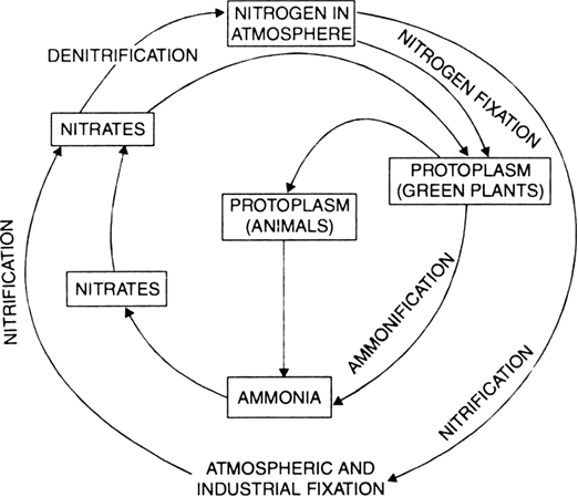 Briefly describe the nitrogen cycle in the environment or draw a nitrogen cycle ccuart Image collections
