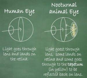 zigya.eye1