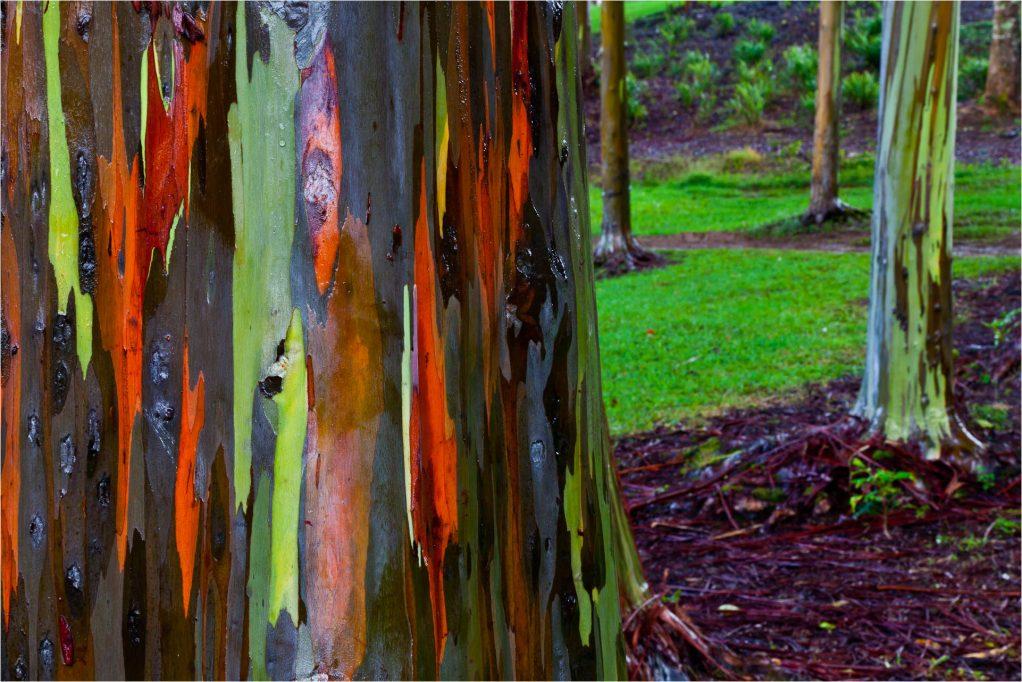 zigya.com:rainbowtree