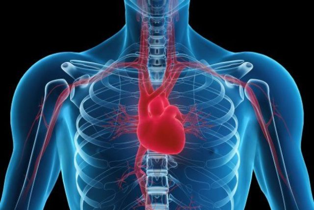 where is the heart exactly located? left, right or center?, Human Body