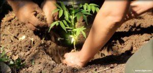 ભાવનગર ખાતે ગ્રીનસીટી દ્વારા વર્ષાઋતુ દરમ્યાન શહેરમાં 1000 વૃક્ષોનું વાવેતર