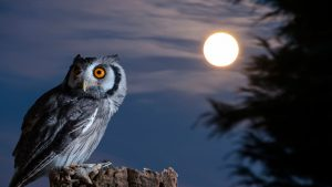 Owls and Night Vision