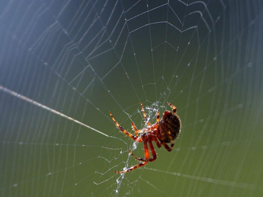 spider web_Zigya