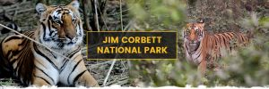 Jim Corbett National Park – Uttarakhand