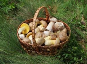 Magnanimous Mushrooms